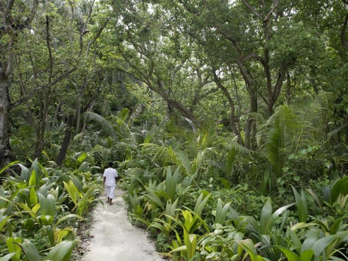 Der Resort Dschungel