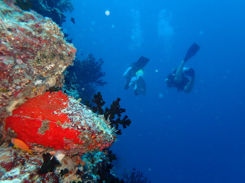 The Nautilus Beach & Ocean House Malediven - Tauchen am Riff