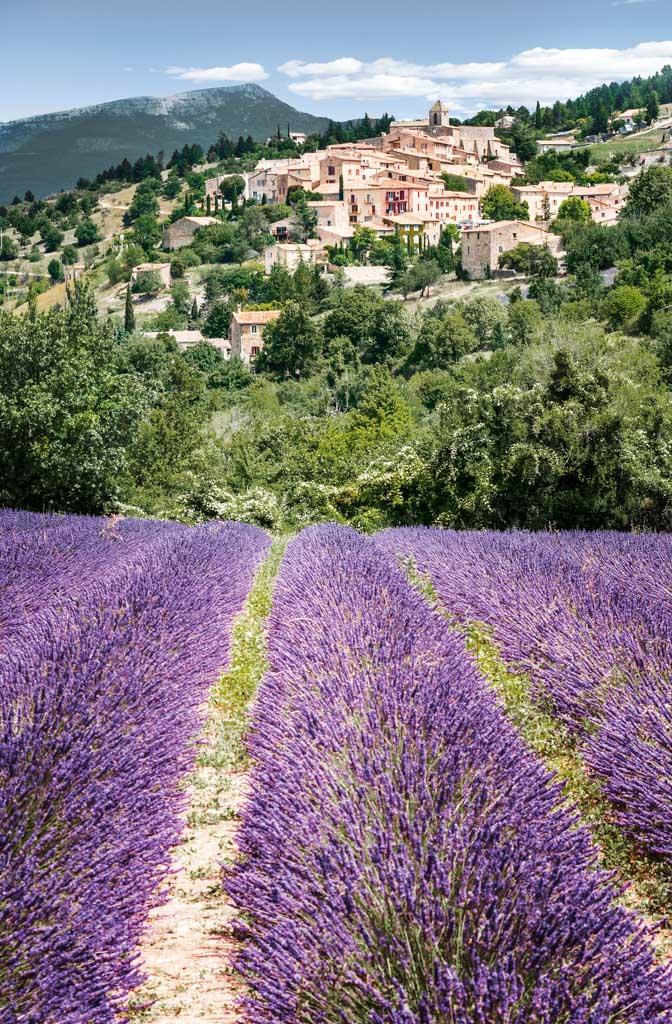 Flusskreuzfahrt Frankreich - Lavendel in der Provence