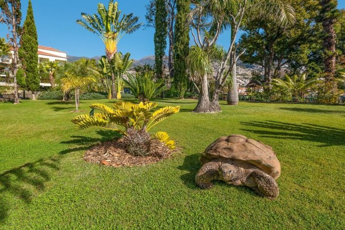 Gartenanblick mit Schildkröte ;-)